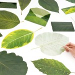 leaf letter by neo-green and eding:post.