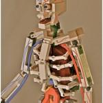 Lego Anatomy Skeleton.